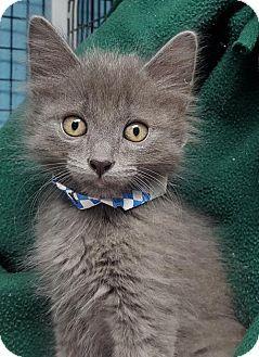 Prattville, AL - Domestic Shorthair. Meet Castor 25294, a kitten for adoption. http://www.adoptapet.com/pet/16532887-prattville-alabama-kitten