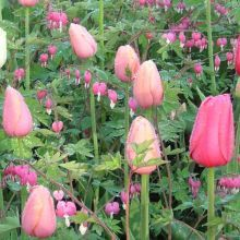 Companion Planting Bulbs with Perennials