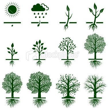 tree and roots symbol tree growing growth life cycle icon set stock illustration 19638696. Black Bedroom Furniture Sets. Home Design Ideas