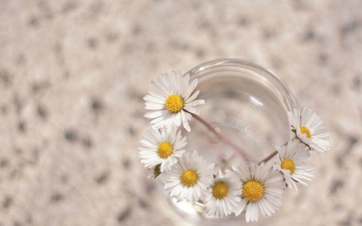 daisies bokeh