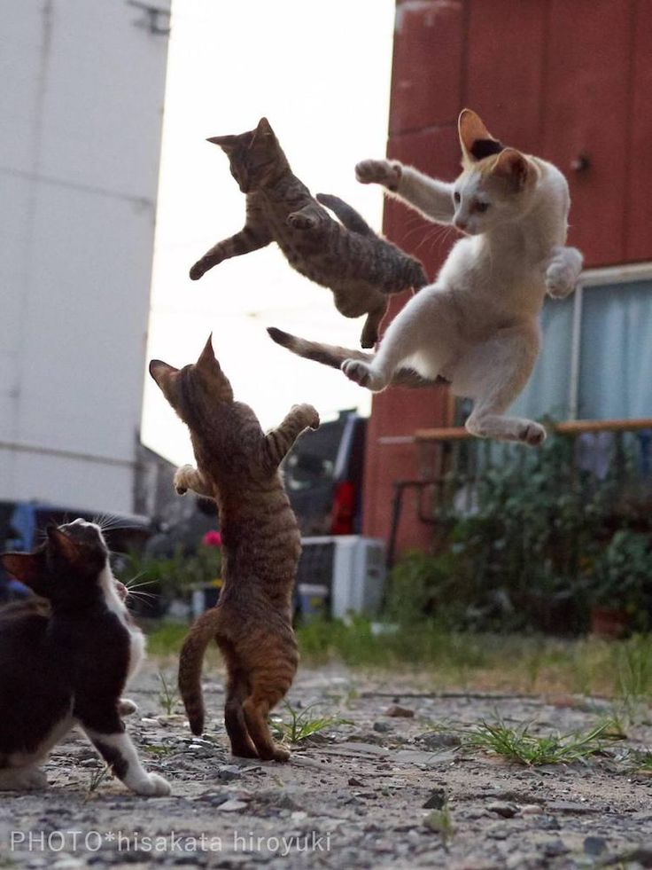Photographer Hisakata Hiroyuki captures agile felines in the midst of the action. They transform from ordinary creatures into skilled ninja cats.