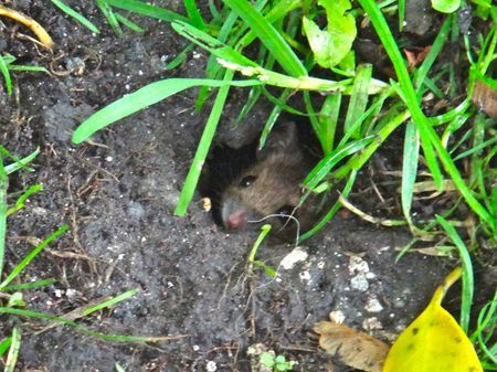 Peeping Mouse Photo by Olivia B. -- National Geographic Your Shot
