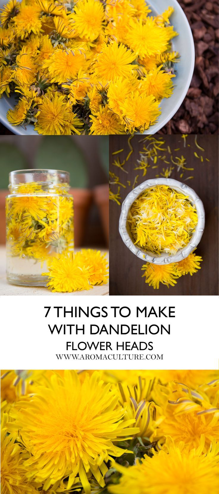 7 Things To Make With Dandelion Flower Heads Aroma Culture Dandelion Recipes Dandelion Flower Herbalism