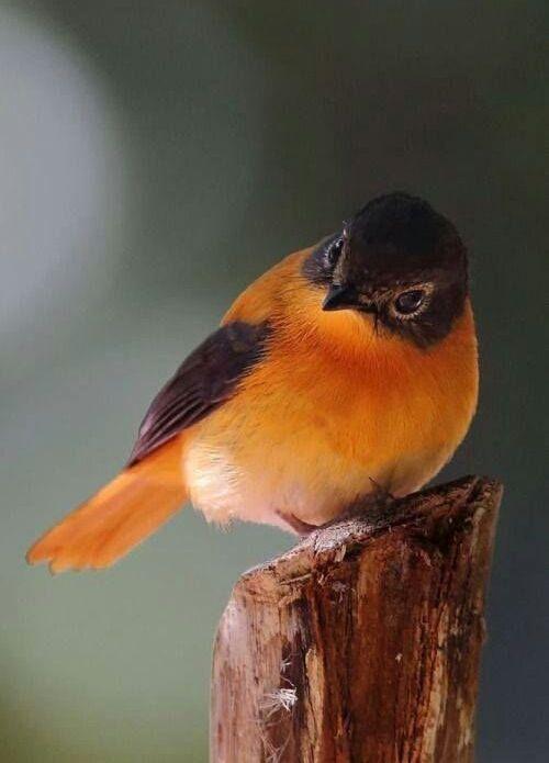 Little bird, beautiful color
