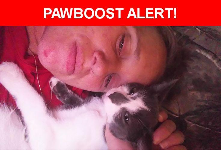 Please spread the word! Ecko was last seen in Mount Carmel, PA 17851.    Nearest Address: Near East Mount Carmel Avenue, Mount Carmel, PA, United States