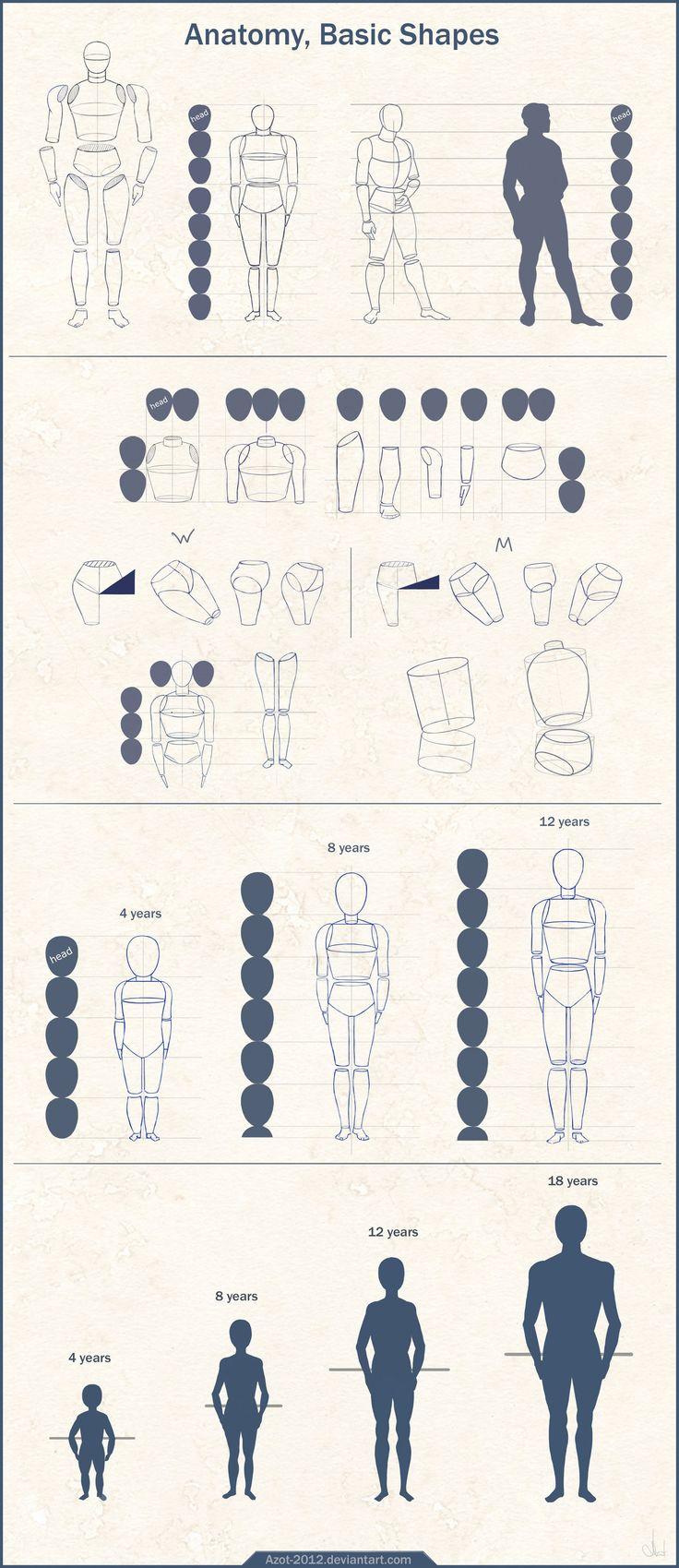 #drawing Anatomy Basic Shapes by Azot-2012.deviantart.com