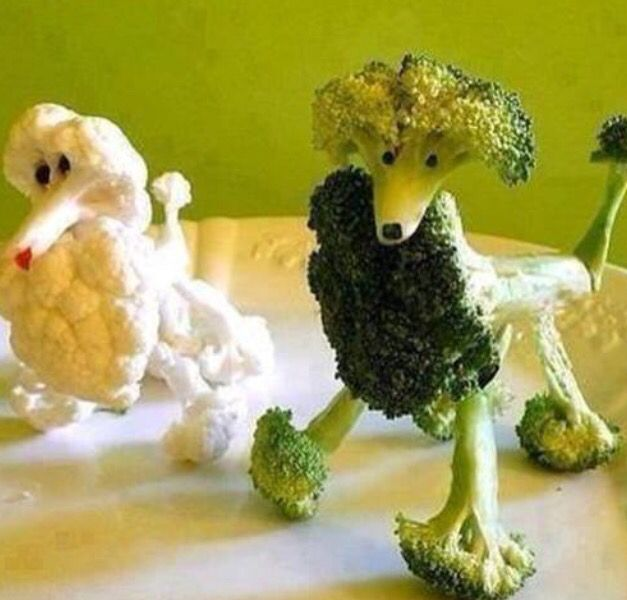 #Poodle #love #broccoli