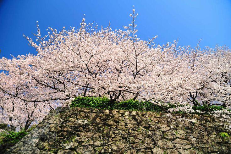 Musim Semi di #Jepang http://goo.gl/fb72hY