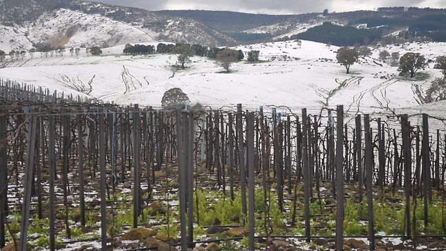 Not snow, HAIL! Lyndoch Hill in The Barossa Valley Sth Australia.