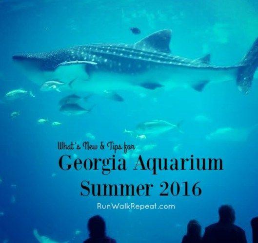 1000 Ideas About Georgia Aquarium On Pinterest Atlanta