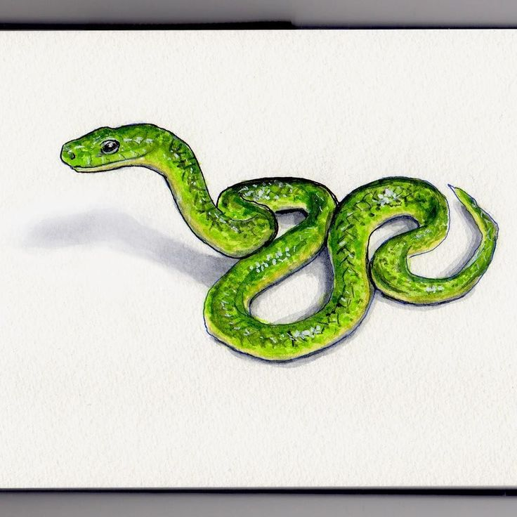 S IS FOR SNAKE There were so many options for S it was super hard to choose so in the end I just opted for the most colorful option I could find. Choosing a snake I then landed on this bright green little guy who I think is a Chinese rat snake though I rather improvised my way through his creation. Im not really a fan of snakes usually but this one seemed rather cute as snakes go so I decided to #doodlewash him.  This kind of snake apparently feeds mainly on rats and other rodents so thats…