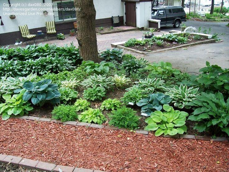 Landscaping Under The Trees : Landscaping under oak trees florida beginner