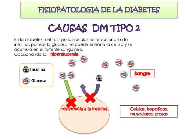 Diabetes Mellitus II Se desarrolla gradualmente, debido a que el páncreas se va deteriorando con el tiempo, por la sobrepr...