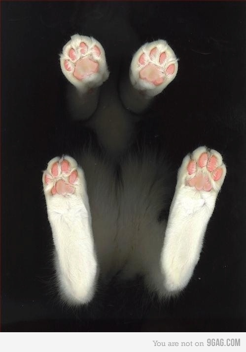 Fur on bottom of cats foot
