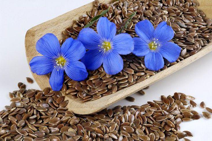 Семена льна богаты витамином А, цинком, магнием, железом, пищевыми волокнами, которые так полезны для нормальной работы кишечника и поддержания здоровой микрофлоры. А также содержат большое количество усвояемого белка (даже больше, чем в куриной грудке), что делает их прекрасным диетическим продуктом.