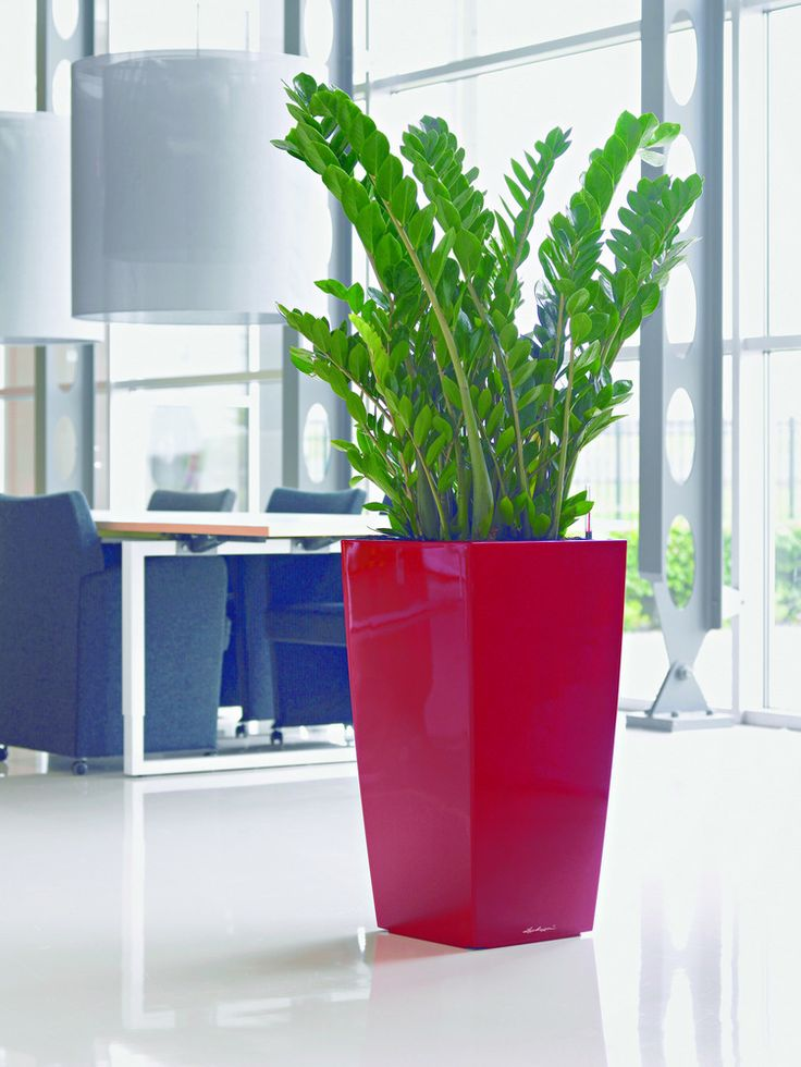 Cube Self Watering Planter...appropriate For Office And Apartment.. Elegant  And