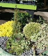 Dwarf Conifers, Conifer Trees, Containers, Small Ornamental Trees