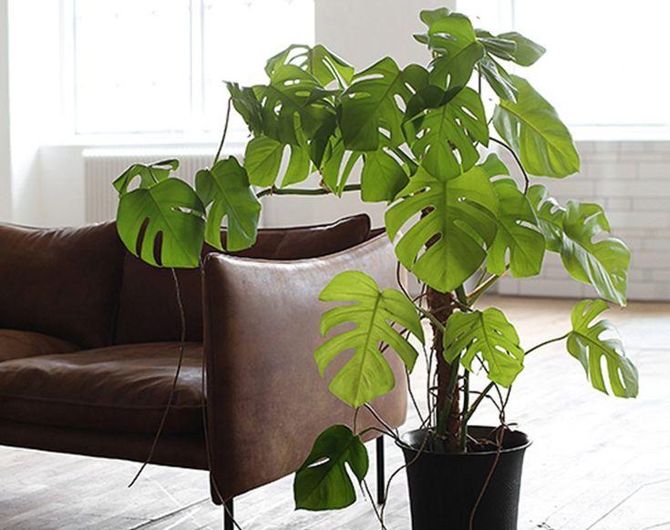 Vilka gröna växter väljer inredningsbloggarna? Aldrig har väl gröna växter varit så inne i inredningen som nu. Eller nja, de senaste två årenmåste jag säga. Det frodas och spirar på varje uppslag i...