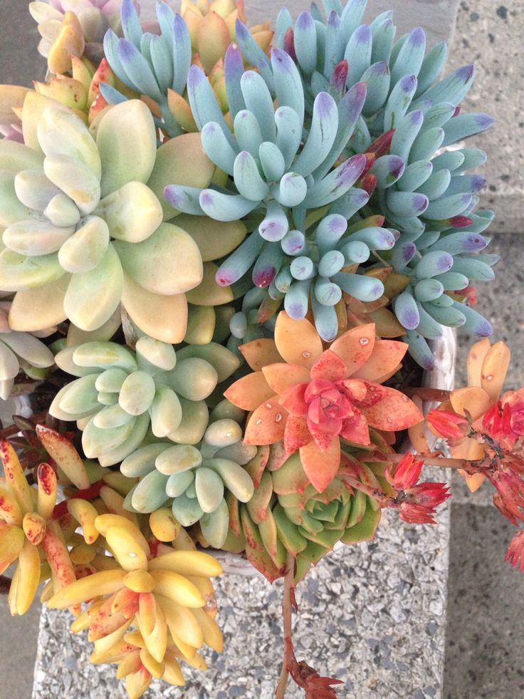 the rainbow connection, succulents style. have you ever seen such a colorful and gorgeous bouquet of succulents? © desixlb 2014