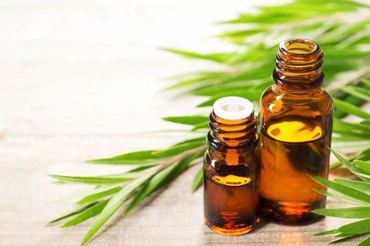 Olejek z drzewa herbacianego – na co pomaga i jak go stosować?