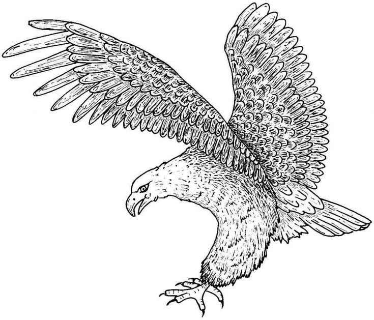 44 best free printable coloring pages images on Pinterest Dream - new eagles to coloring pages