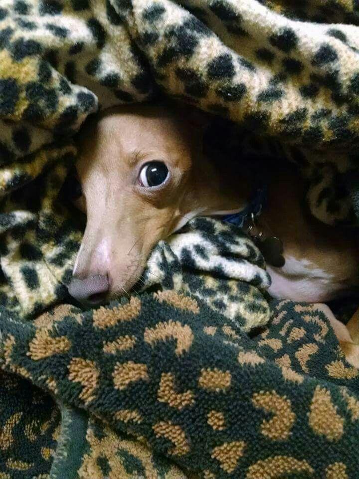 Bentley loves warm laundry
