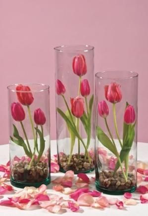 Tulips in glass cylinder