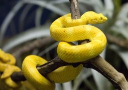 Central Florida Zoo Coupons & Discounts | Sanford Deals | 2014
