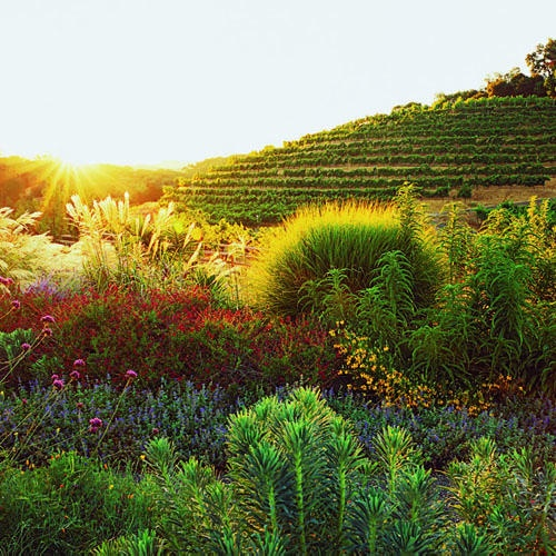 97 best sonoma county wineries images on pinterest - The well tended perennial garden ...