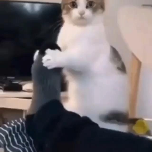 Pin Auf Animals