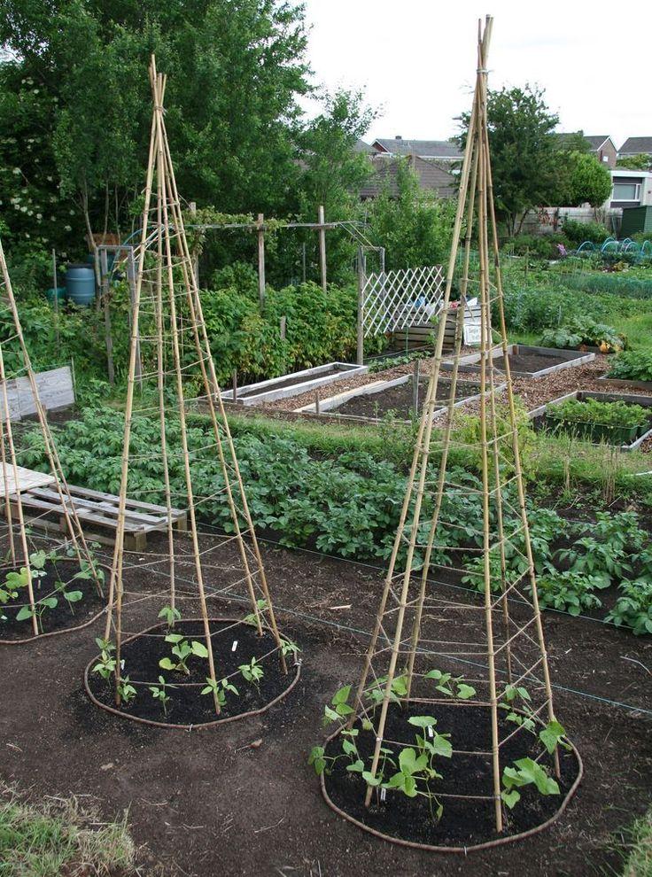 Lillbutton's Farm: Bean Teepees