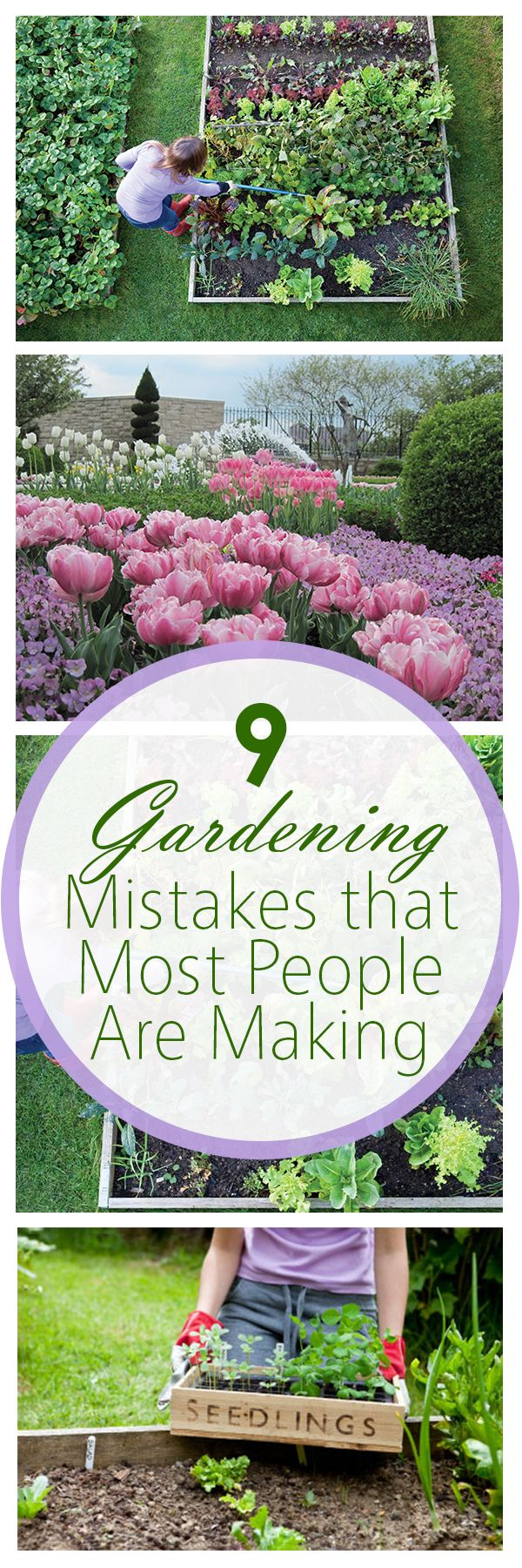 9 Gardening Mistakes that Most People Are Making- really quite useful tips!