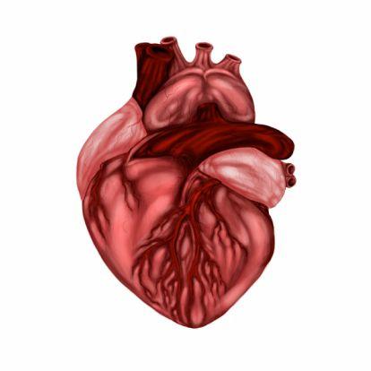 anatomisch-hart.jpg (414×414)