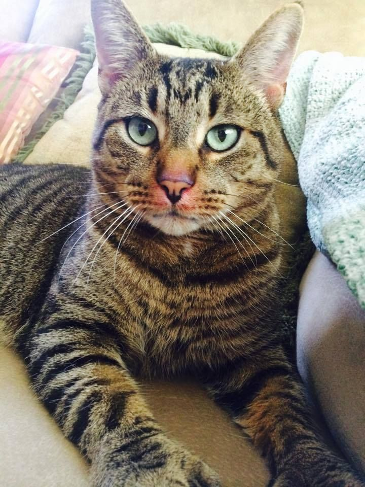 >> Derby, CT Lost Tiger Cat Sodom Lane & John St Scabby