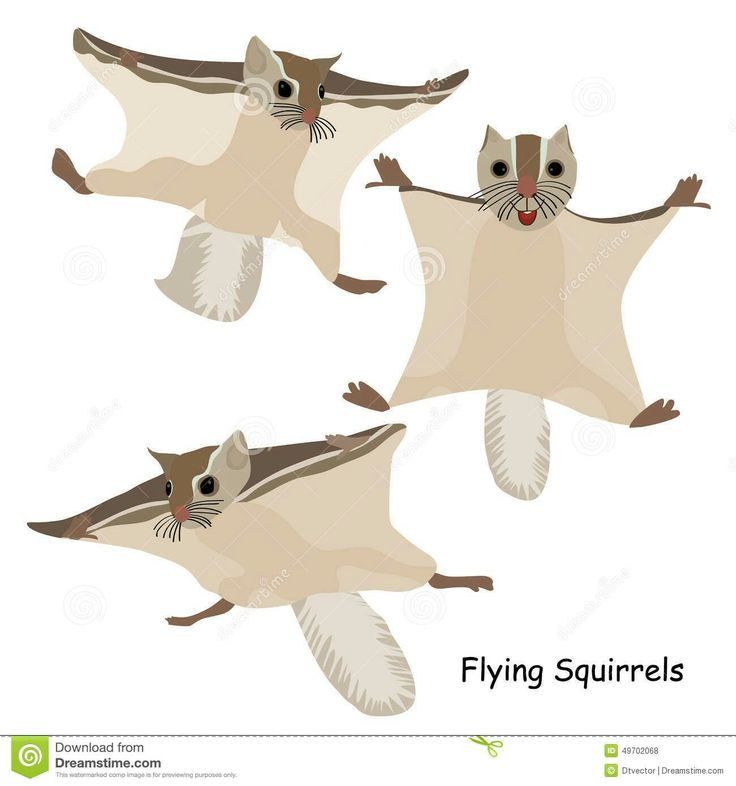 21 Best Flying Squirrel Images By Olga Dragunova On Pinterest