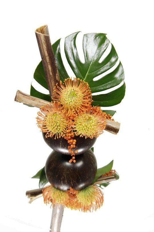 Nutans, feuille de monstera, feuille de banane sechée dans un contenant en coco naturelle. Penja Rungis : Fournisseur de végétaux insolites