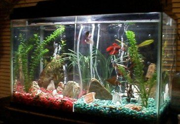 17 best images about projects to try on pinterest nail for 2 gallon betta fish tank