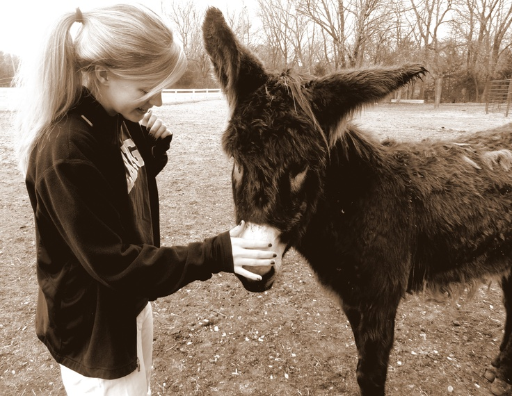 Donkey's are adorable!