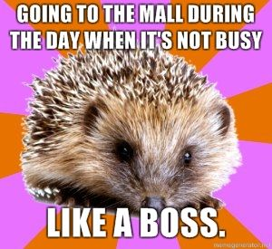 I'm so excited we have our own meme. xD Homeschoolers shall rule the world. -- The Homeschooled Hedgehog...wait this is a real meme?