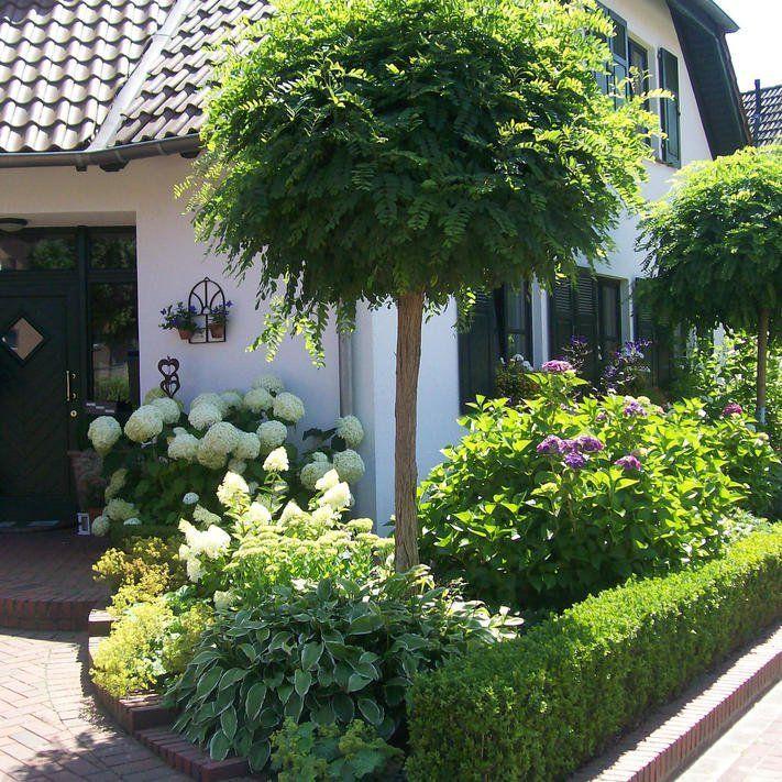 Kugelakazie Kugelrobinie Kugelakazie Robinia Pseudoacacia Umbraculifera The Post Kugelakazie Kugelrobinie Appeare Small Yard Landscaping Garden Design Garden