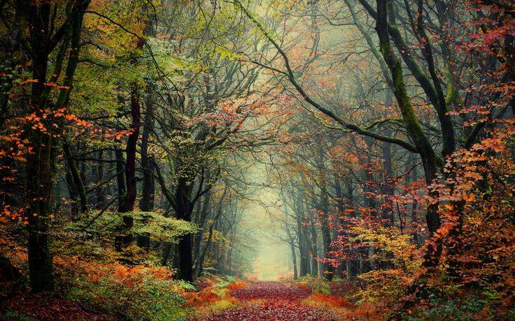 Скачать обои природа, лес, осень, раздел природа в разрешении 1920x1200
