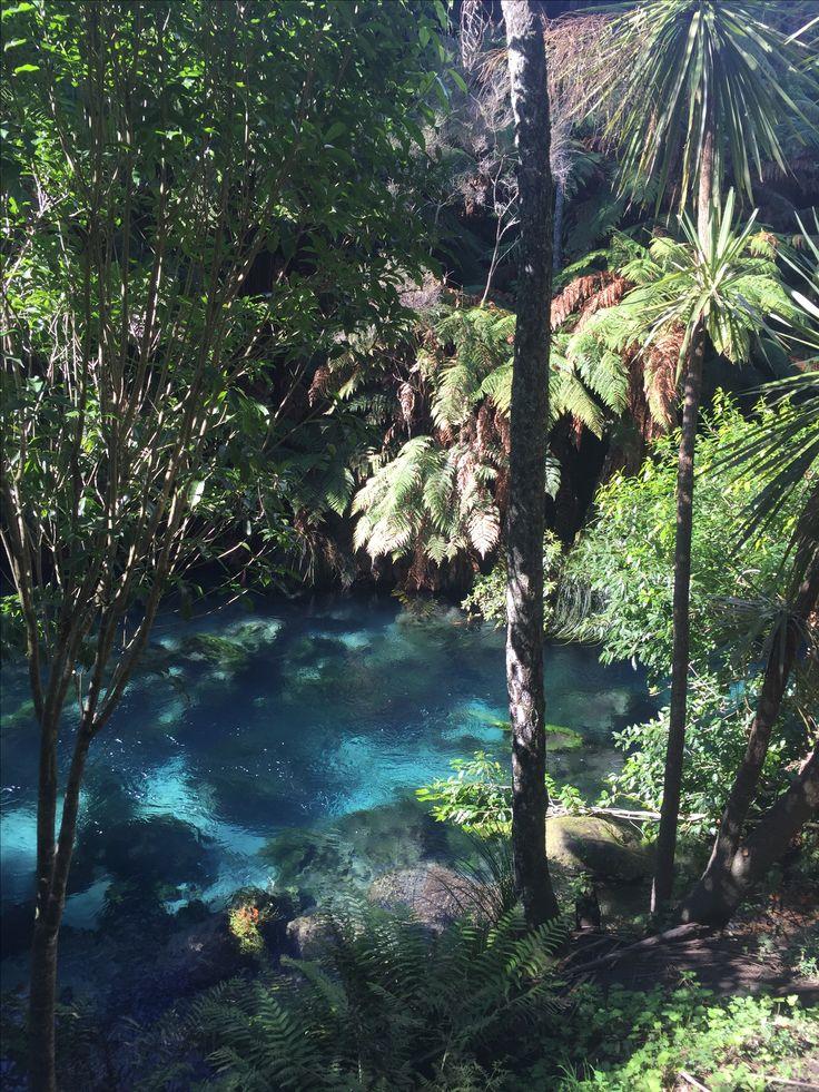 Blue Springs, Putaruru