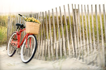 someday i really want a beach-cruiser with a little basket in front to carry flowers in.