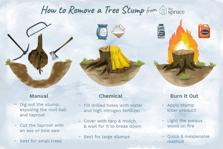 Easy and costeffective ways to remove a tree stump tree