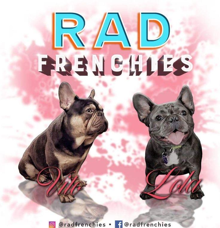 Www Radfrenchies Ca Rad Frenchies French Bulldog Bulldog