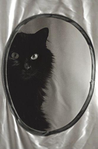 ♥Black cat Mirror, mirror.