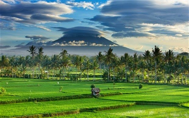 productive land in bali - Google Search