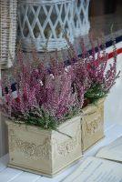 In the flowerpot by black-ladybird