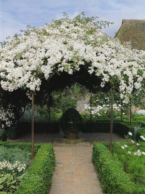 Canopy of blooms