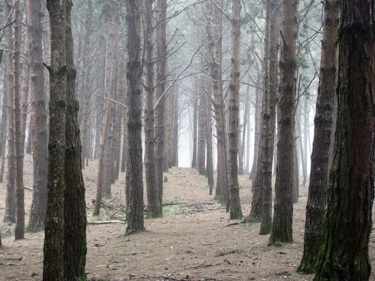 The Pine forest @ Kodaikanal